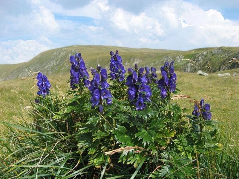 Красиві польові і лугові квіти: жовті, білі, сині, рожеві, фіолетові 22