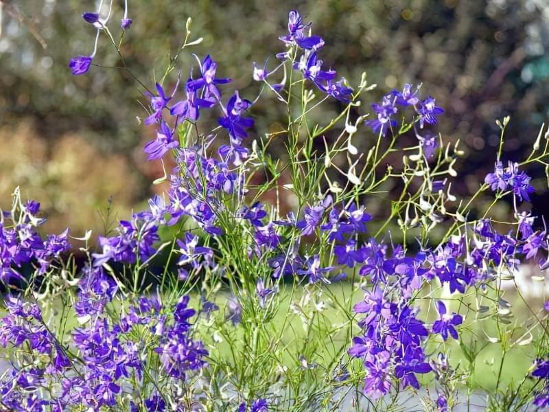 Красиві польові і лугові квіти: жовті, білі, сині, рожеві, фіолетові 27