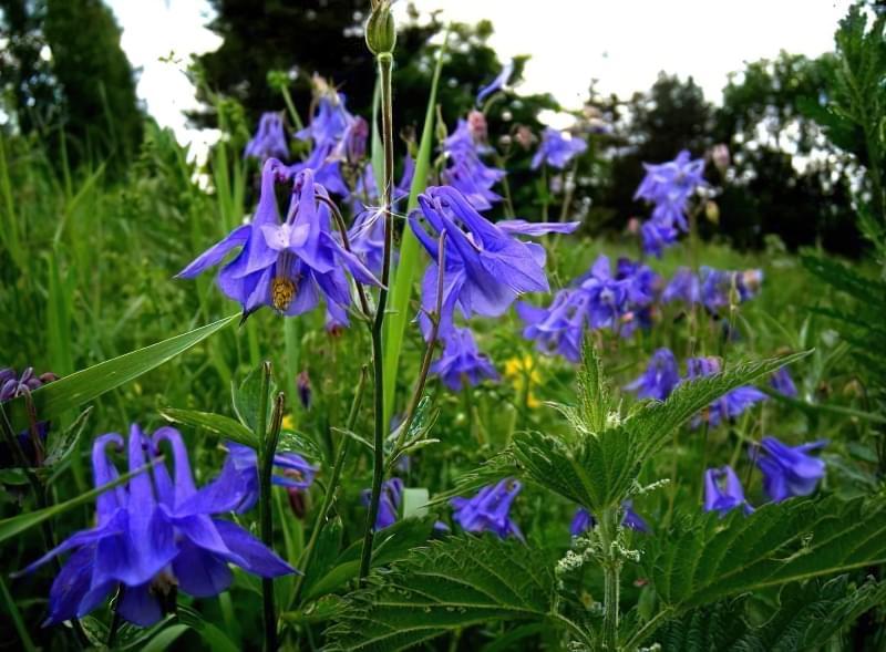 Красиві польові і лугові квіти: жовті, білі, сині, рожеві, фіолетові 21