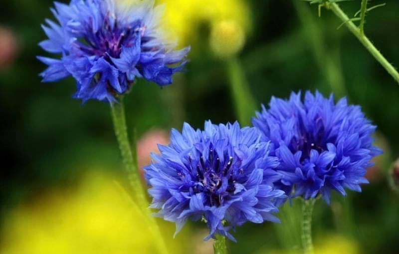Значення кольорів і їх правильне поєднання на квітах 2