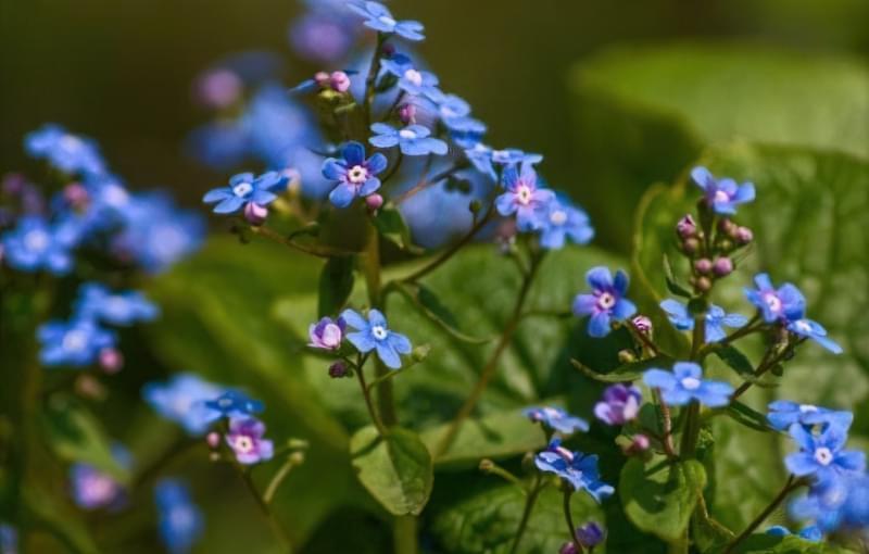 Значення кольорів і їх правильне поєднання на квітах 3