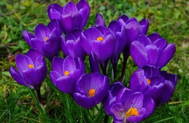 Значення кольорів і їх правильне поєднання на квітах 4