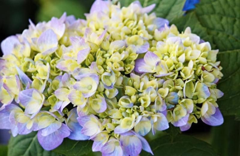 Значення кольорів і їх правильне поєднання на квітах 5