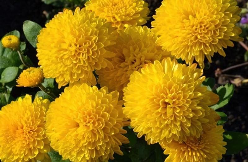 Значення кольорів і їх правильне поєднання на квітах 6