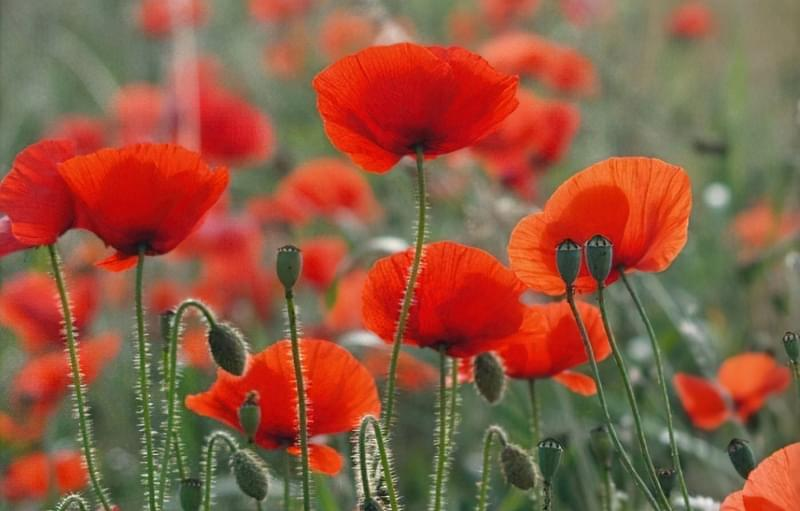 Значення кольорів і їх правильне поєднання на квітах 8