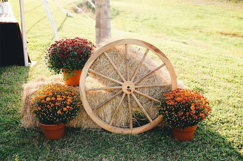 Як можна прикрасити ділянку восени 2