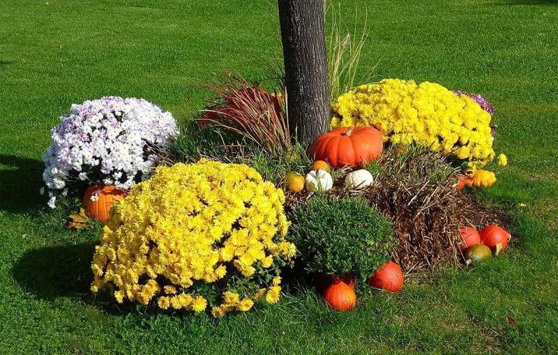 Як можна прикрасити ділянку восени 3
