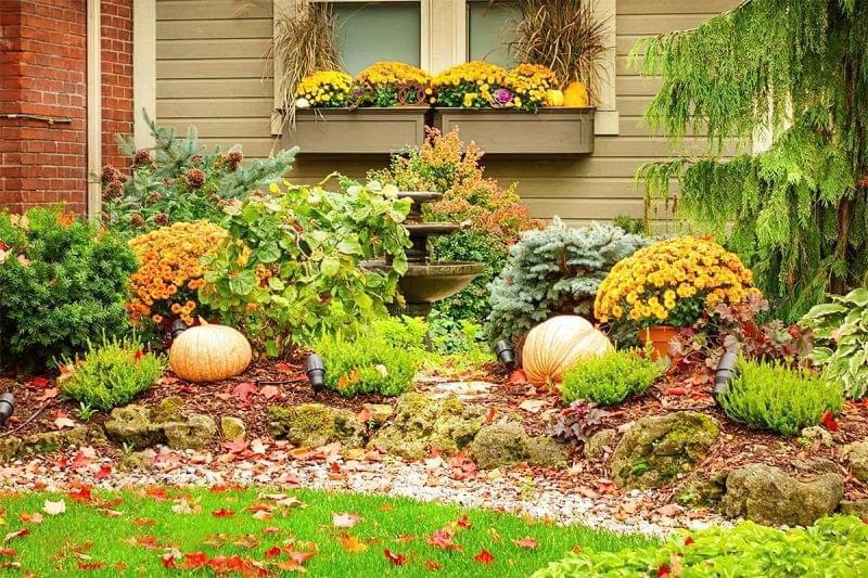 Як можна прикрасити ділянку восени 1