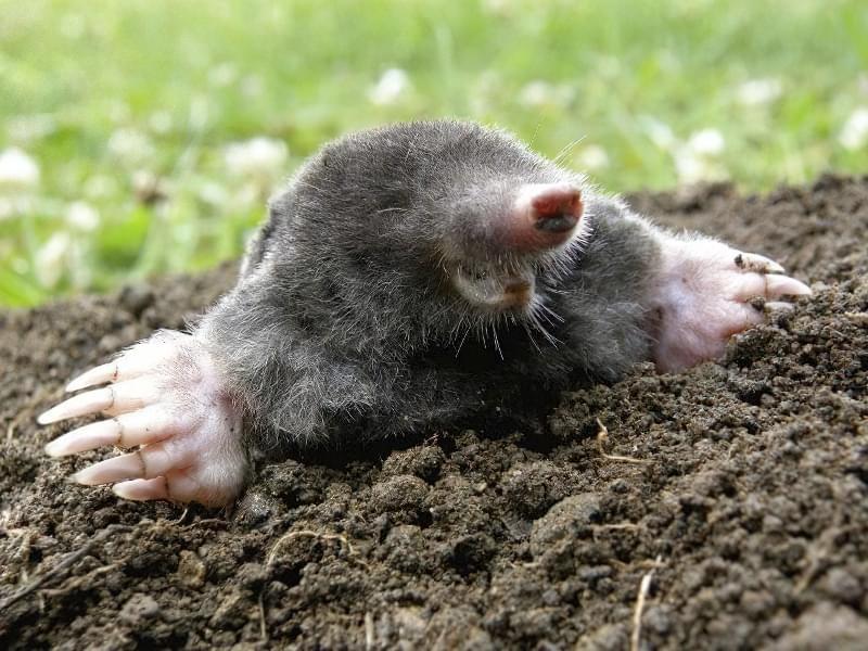 Тварини, які корисні для саду та городу 2