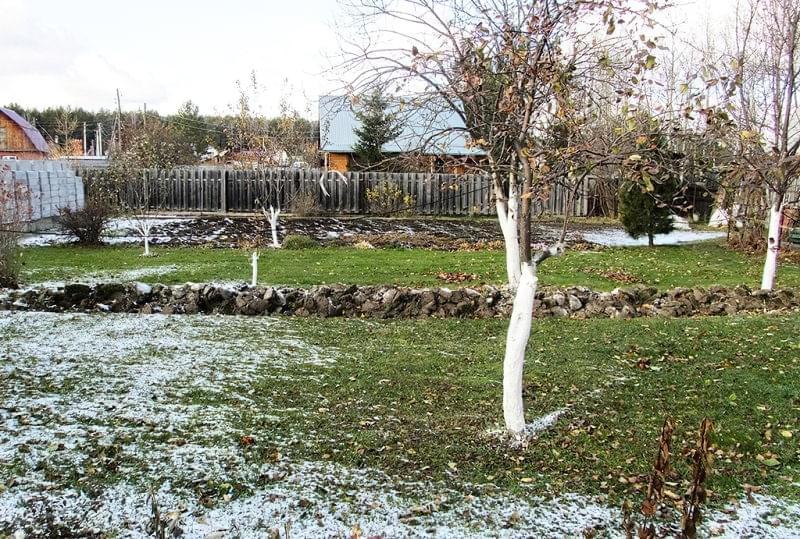 Підготовка яблунь до зими: правила догляду за деревами восени 5