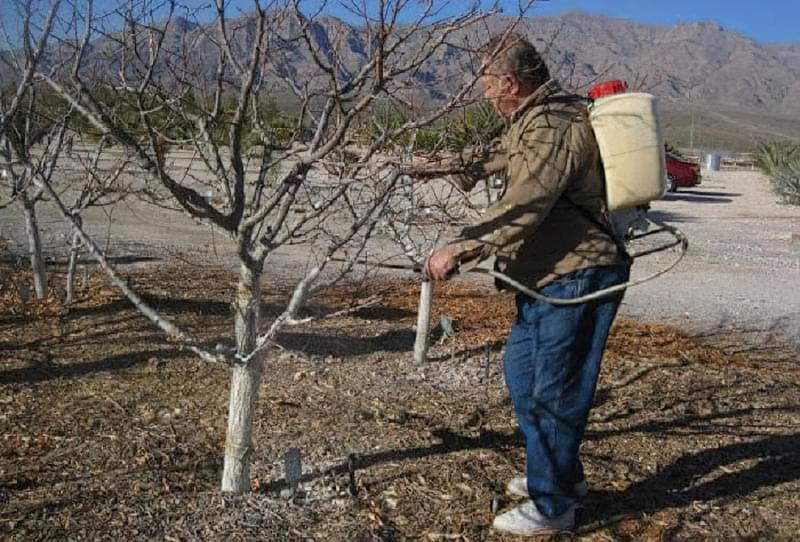 Підготовка яблунь до зими: правила догляду за деревами восени 6