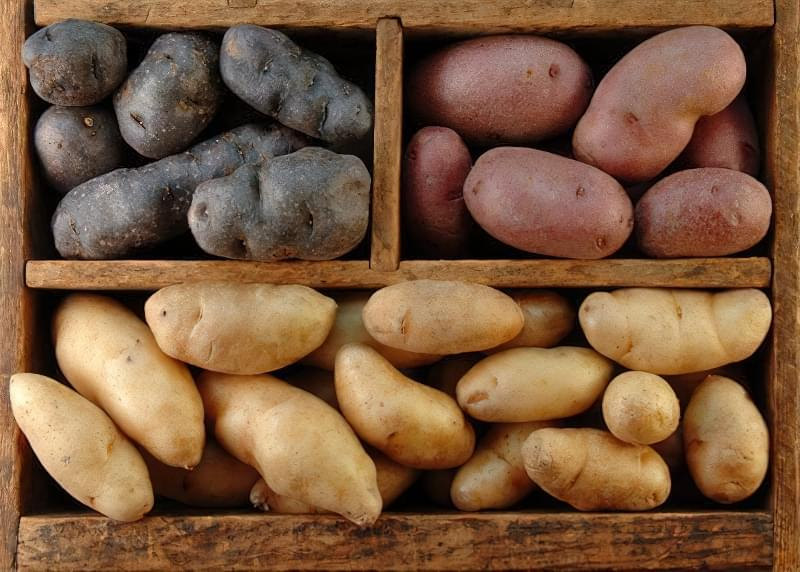Як правильно зберігати картоплю: підготовка, умови і температура 1