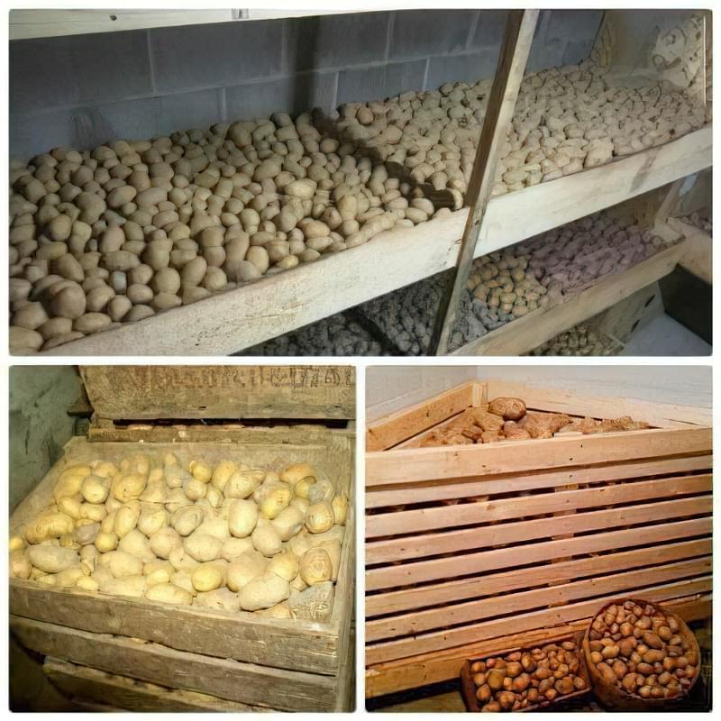 Як правильно зберігати картоплю: підготовка, умови і температура 3
