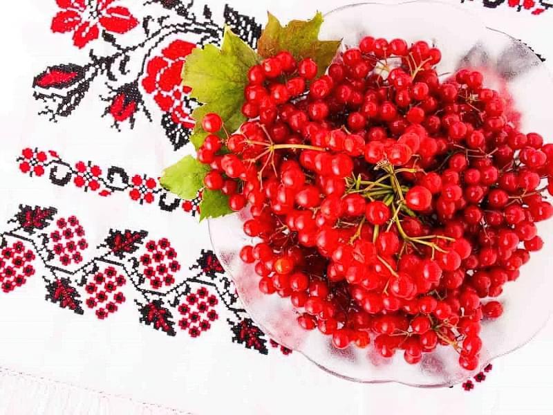 Коли збирати ягоди калини: терміни збору, як зберігати 1