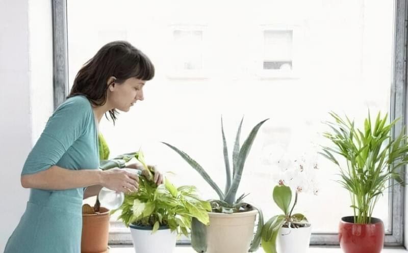Підготовка кімнатних рослин до зими: підживлення, полив, догляд 3