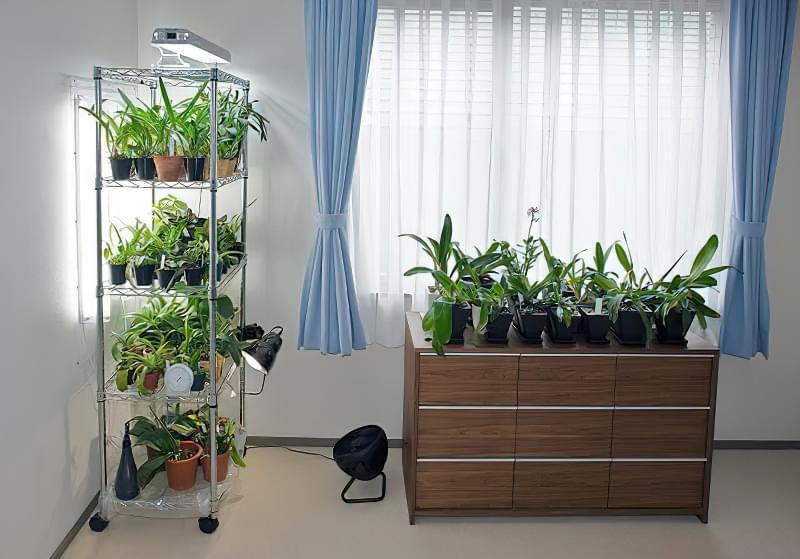 Підготовка кімнатних рослин до зими: підживлення, полив, догляд 4