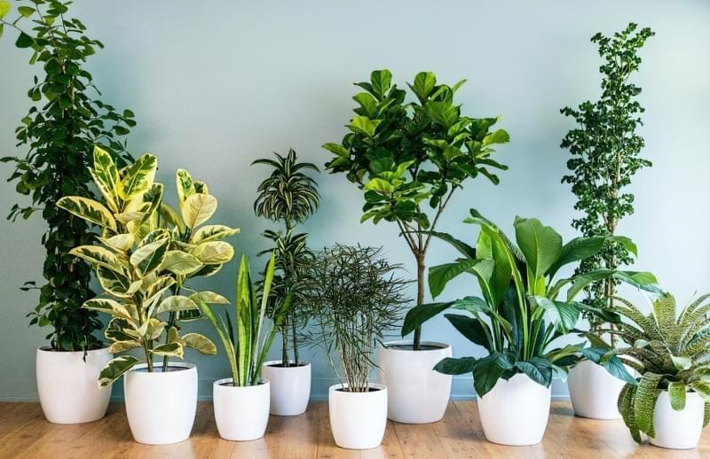 Підготовка кімнатних рослин до зими: підживлення, полив, догляд 1