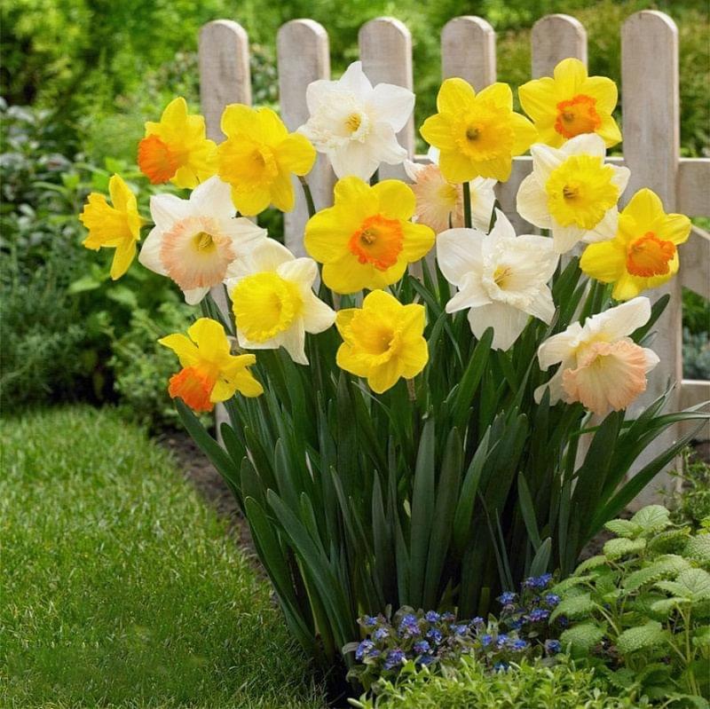 Квіти, цибулини яких варто посадити восени 3