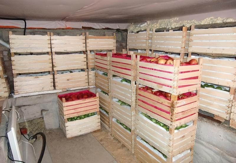 Способи і умови зберігання яблук взимку 2
