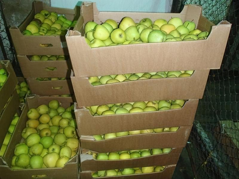 Способи і умови зберігання яблук взимку 4