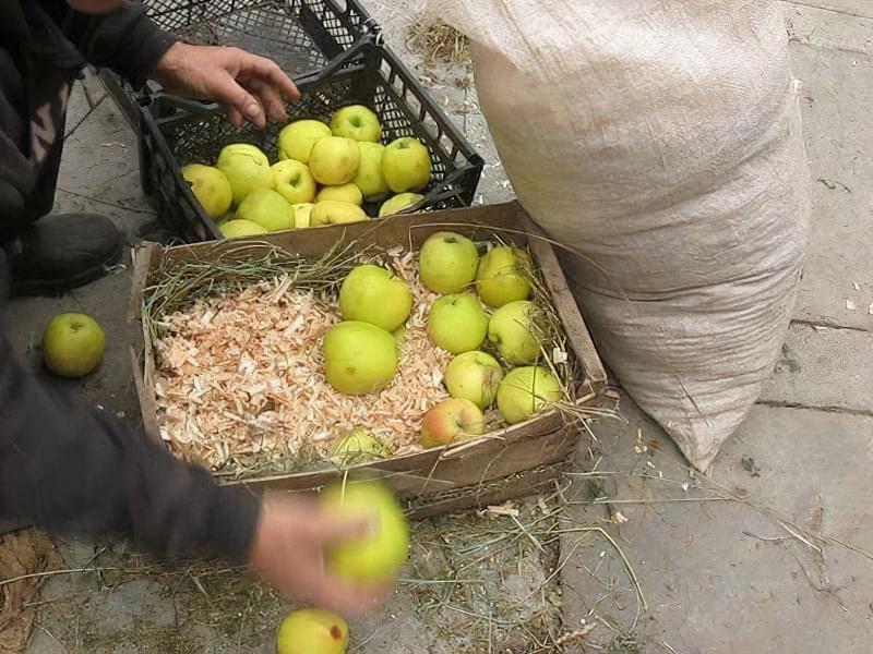 Способи і умови зберігання яблук взимку 6