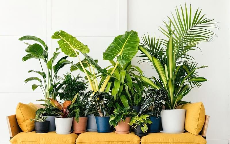 Цікаві способи розмістити кімнатні рослини 2