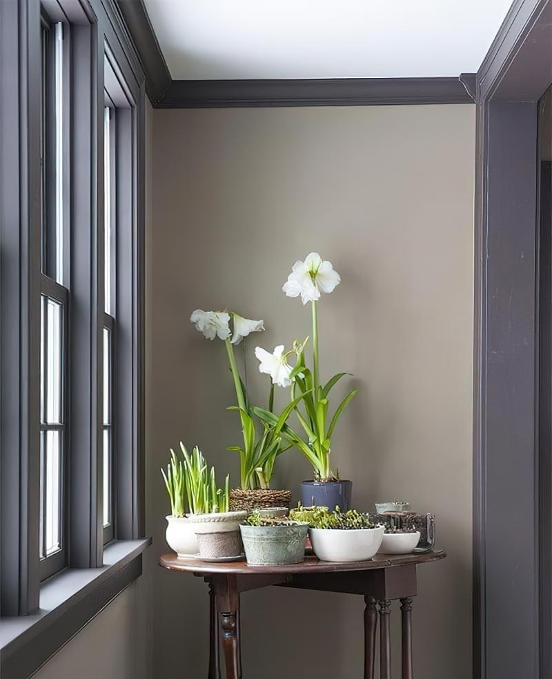 Цікаві способи розмістити кімнатні рослини 11