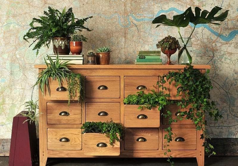 Цікаві способи розмістити кімнатні рослини 13