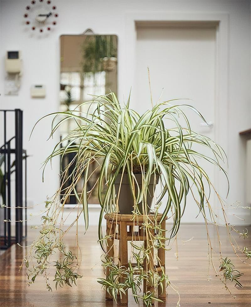 Цікаві способи розмістити кімнатні рослини 3