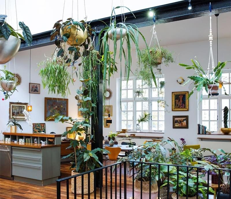 Цікаві способи розмістити кімнатні рослини 4