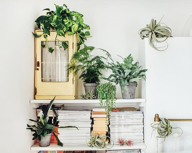 Цікаві способи розмістити кімнатні рослини 5