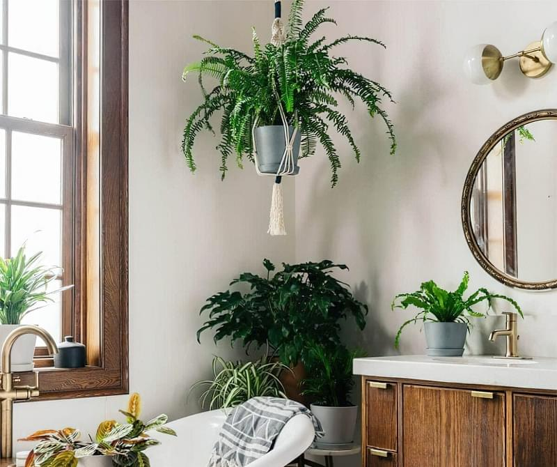 Цікаві способи розмістити кімнатні рослини 6