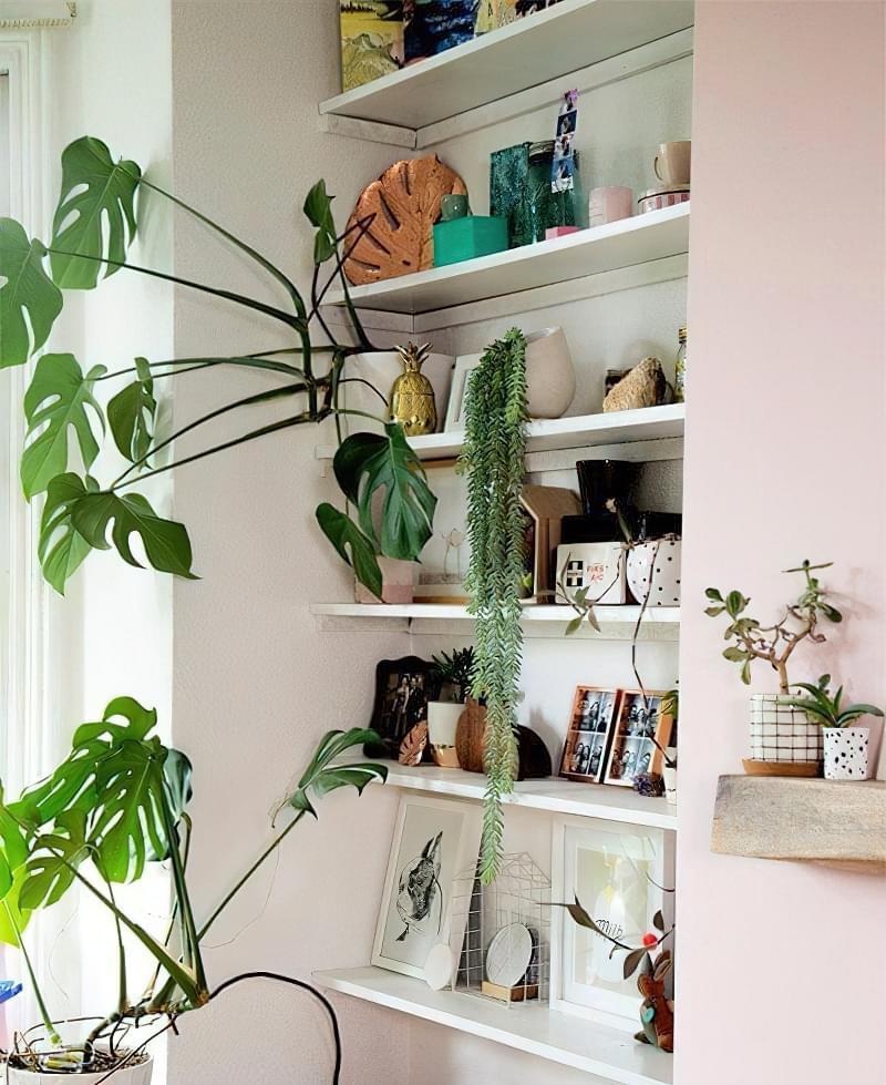 Цікаві способи розмістити кімнатні рослини 7