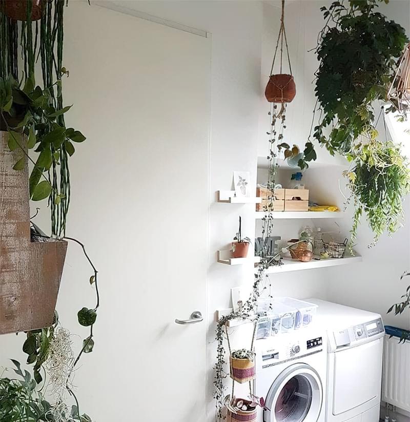 Цікаві способи розмістити кімнатні рослини 8