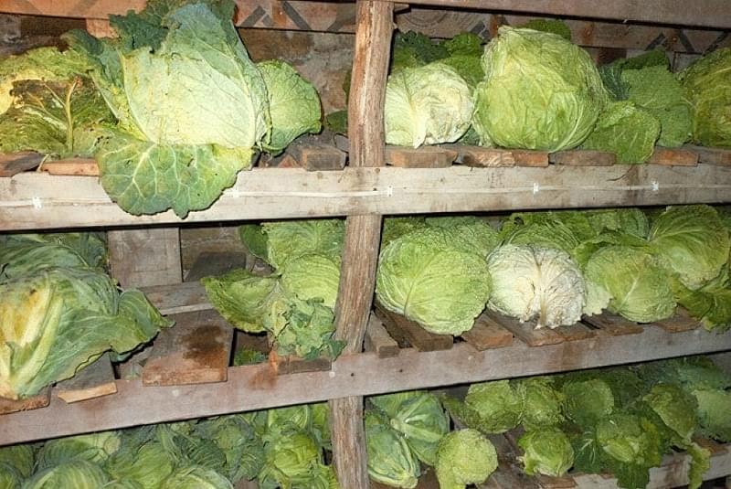 Як і в чому зберігати зимову капусту в домашніх умовах 2