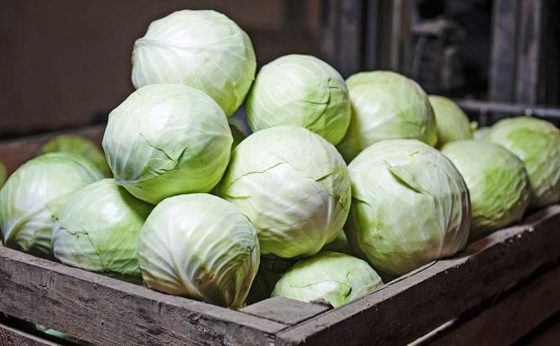 Як і в чому зберігати зимову капусту в домашніх умовах 1