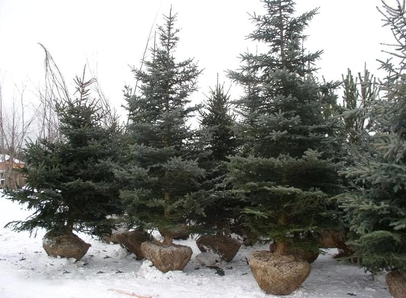 Які рослини можна посадити взимку 2