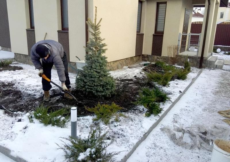 Які рослини можна посадити взимку 1