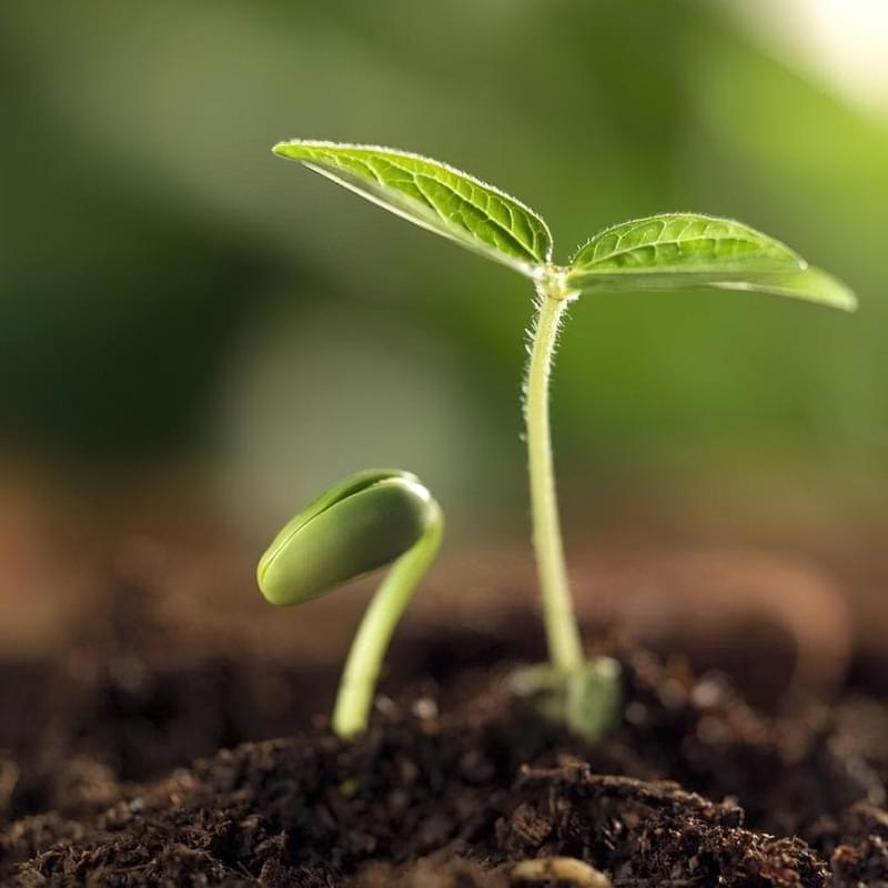 Скільки днів сходить насіння перцю, томатів, огірків та інших овочів 1