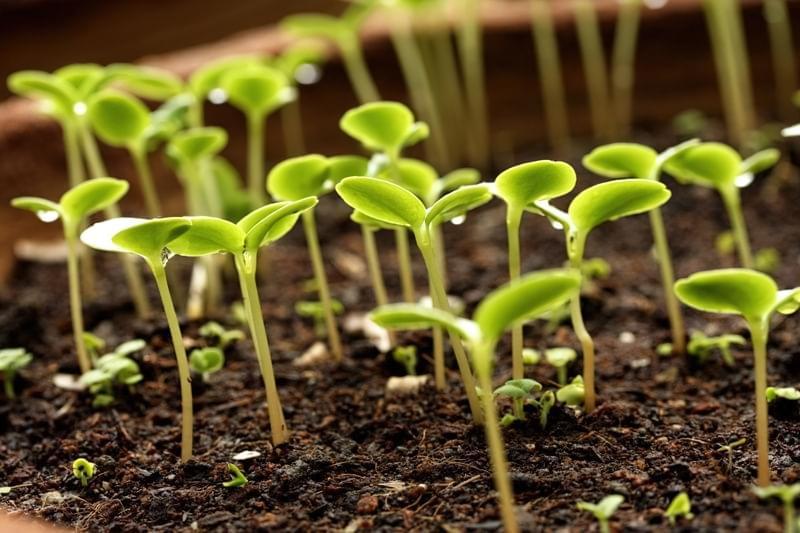Як перевірити насіння на схожість, робочі способи 3