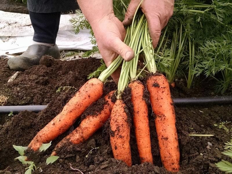 Як зробити сад і город більш продуктивними 5