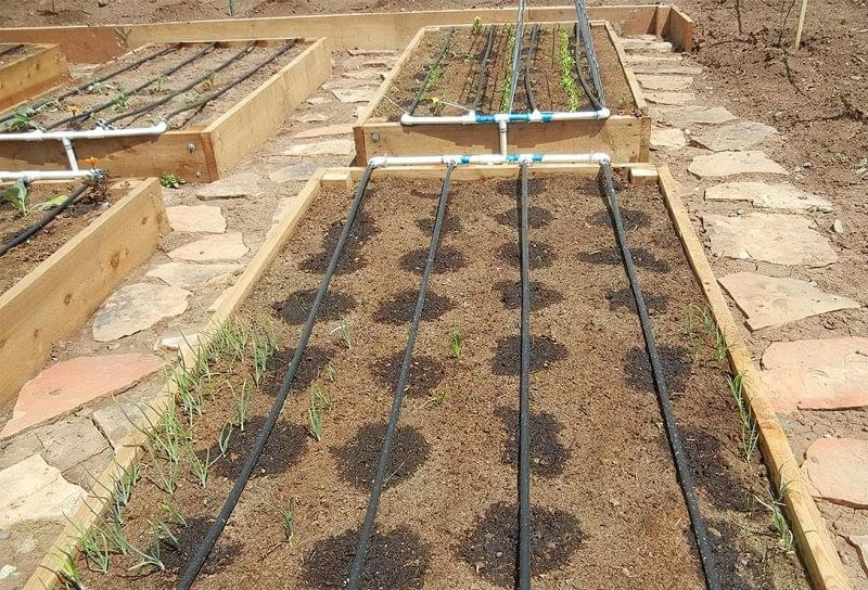 Як зробити сад і город більш продуктивними 6