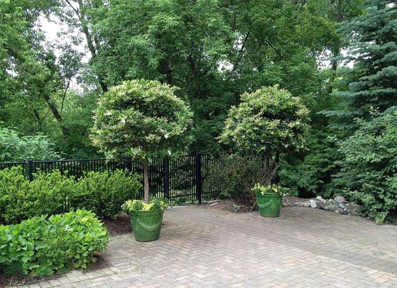 Які дерева можна виростити в контейнерах 6