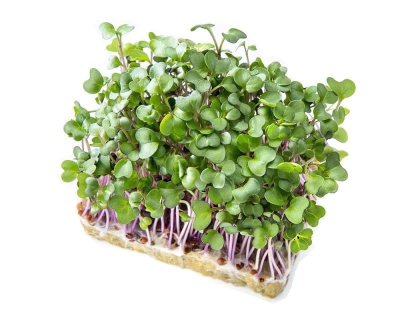 Які рослини підходять для вирощування мікрозелені 2