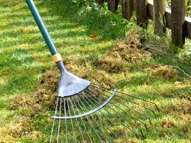 Як доглядати за газоном навесні 2