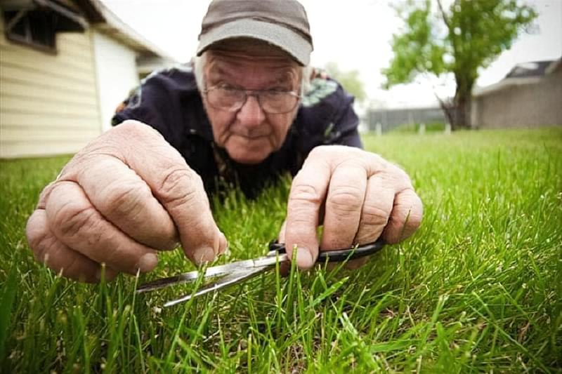 Як доглядати за газоном навесні 3